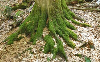 La importancia de las raíces